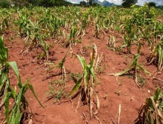 El Gobierno reabrió las exportaciones de maíz